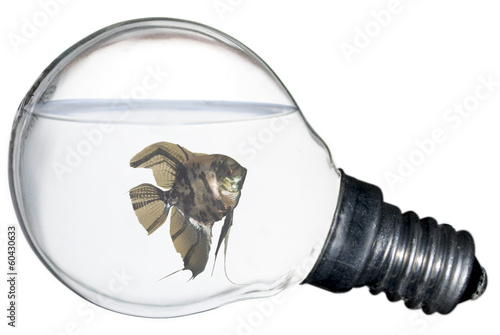 Fish Inside a Light Bulb