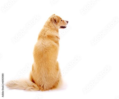 Foto op Canvas Hond Hund – Rückenansicht