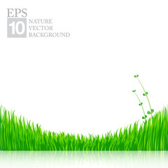 Nature background with green grass 01
