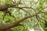 Gałęzie drzew - 60441227