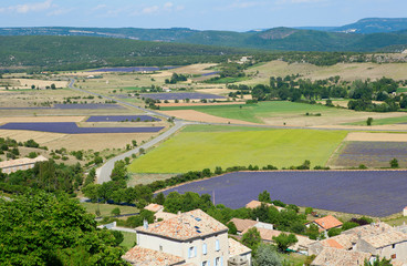 Aerial view of lavender fields in France