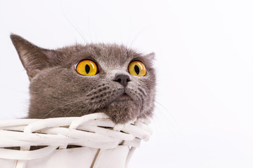 The cat is lying in a basket on a white background
