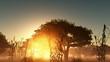fog glowing sun and trees