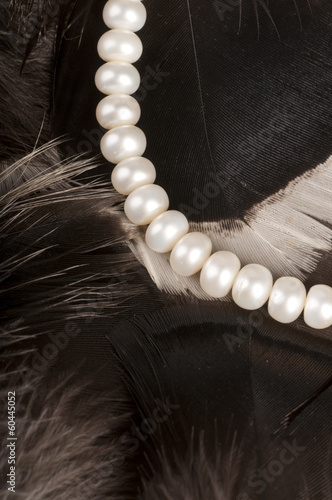 White pearls on feathers