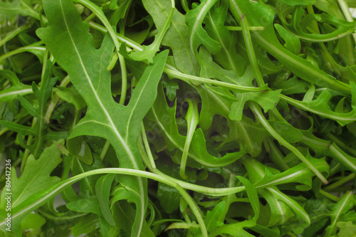 Green ruccola salad heap