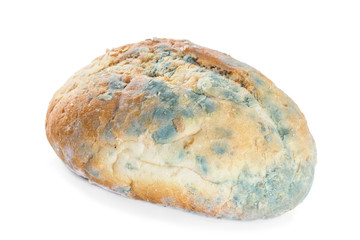 Bread covered in mold. Isolate on white background