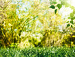 Beauty summer day, abstract environmental backgrounds