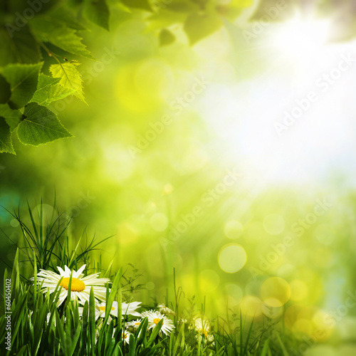 Keuken foto achterwand Weide, Moeras Daisy flowers on the meadow, seasonal backgrounds for your desi