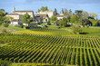 Leinwanddruck Bild - Vineyards of Saint Emilion, Bordeaux Vineyards