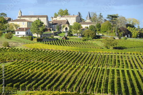 Vineyards of Saint Emilion, Bordeaux Vineyards - 60450610