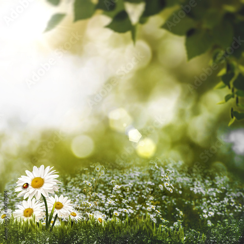 Daisies on the meadow, abstract summer backgrounds
