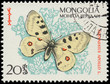 MONGOLIA - CIRCA 1963: A stamp printed in Mongolia shows butterf