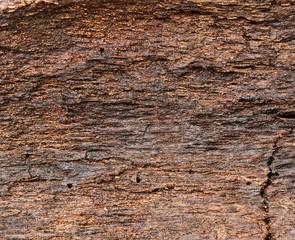 Wet wood bark, damp texture