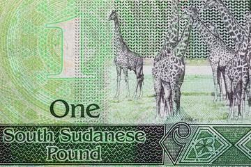1SouthSudanesePound03