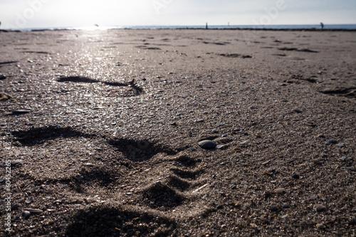 canvas print picture sandstrand und fußabdruck im sand