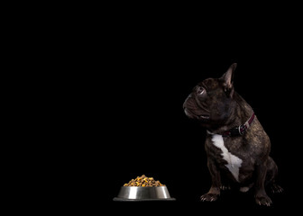 French bulldog sitting on a black background