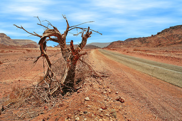 Dead tree on roadside in desert.