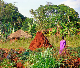 Farmer working on their fields, Buikwe region, Uganda