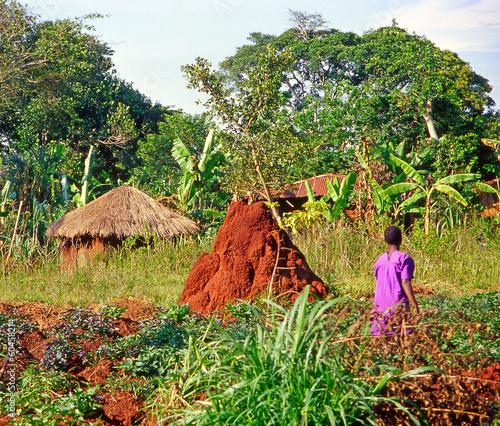 Leinwandbild Motiv Farmer working on their fields, Buikwe region, Uganda