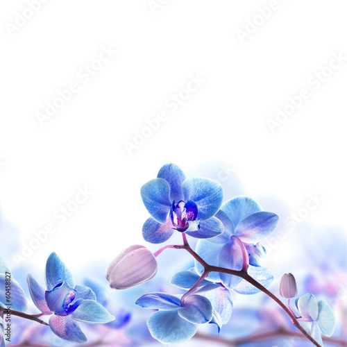 Fotobehang Orchidee Floral background of tropical orchids