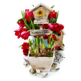 Potted daffodils and little birdhouse