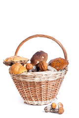 Basket with different mushrooms from forest