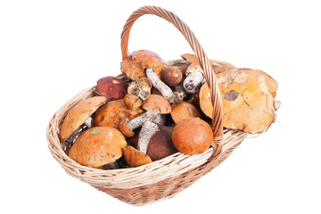 Basket with porcini, orange and brown cap boletuses