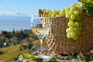 Wine and grapes.Lavaux region, Switzerland