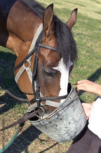 Horse eating feed from a bucket in pasture