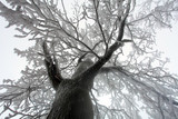 Fototapety Sky sunshine through the winter tree branches (from below).