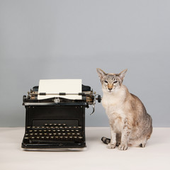 Siamese cat on gray background with type writer