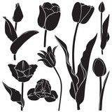 Tulips silhouette set