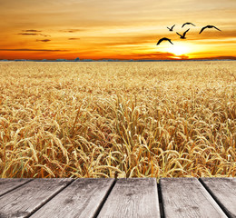 volando por encima del campo de trigo