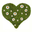 heart symbol from green moss and chamomiles