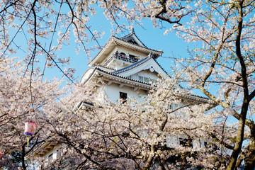 Beautiful sakura with temple