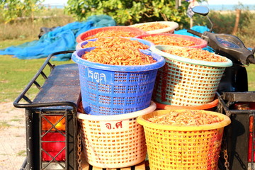 dried shrimp is the best of seafood goods logistic in asia, have