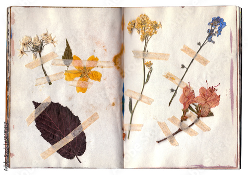 Open book with herbarium pages. Old dry up flowers. Vintage.