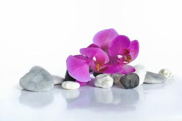 orchidée et cœur en pierre