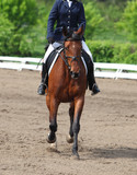 Beautiful sport dressage horse trotting