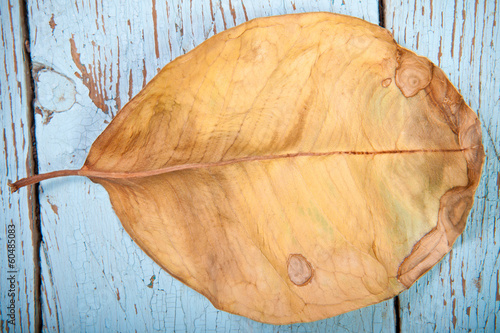 dry leaf ficus on wooden boards