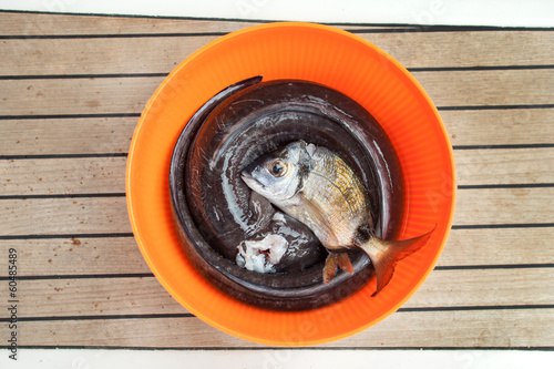 Fresh fish in bucket