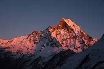Machapuchare (Fish tail) at  sunset