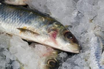 Pesci surgelati