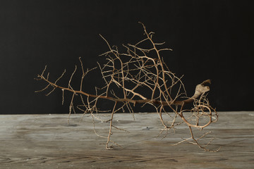 Dy wooden stick on wooden top dark background
