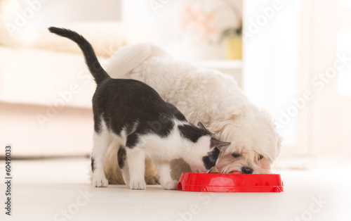 Keuken foto achterwand Kat Dog and cat eating food from a bowl