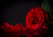 Natural red roses background - 60491439