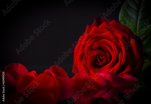 canvas print picture Natural red roses background
