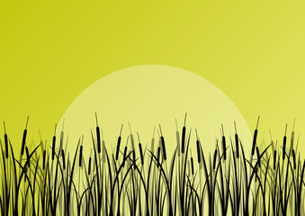 Lake reed and wild water plants detailed silhouettes outdoor ill