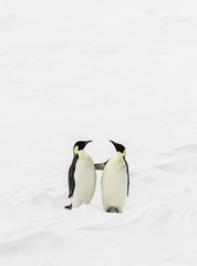 Two penguins standing