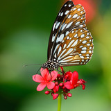 beautiful butterfly sitting in the flower
